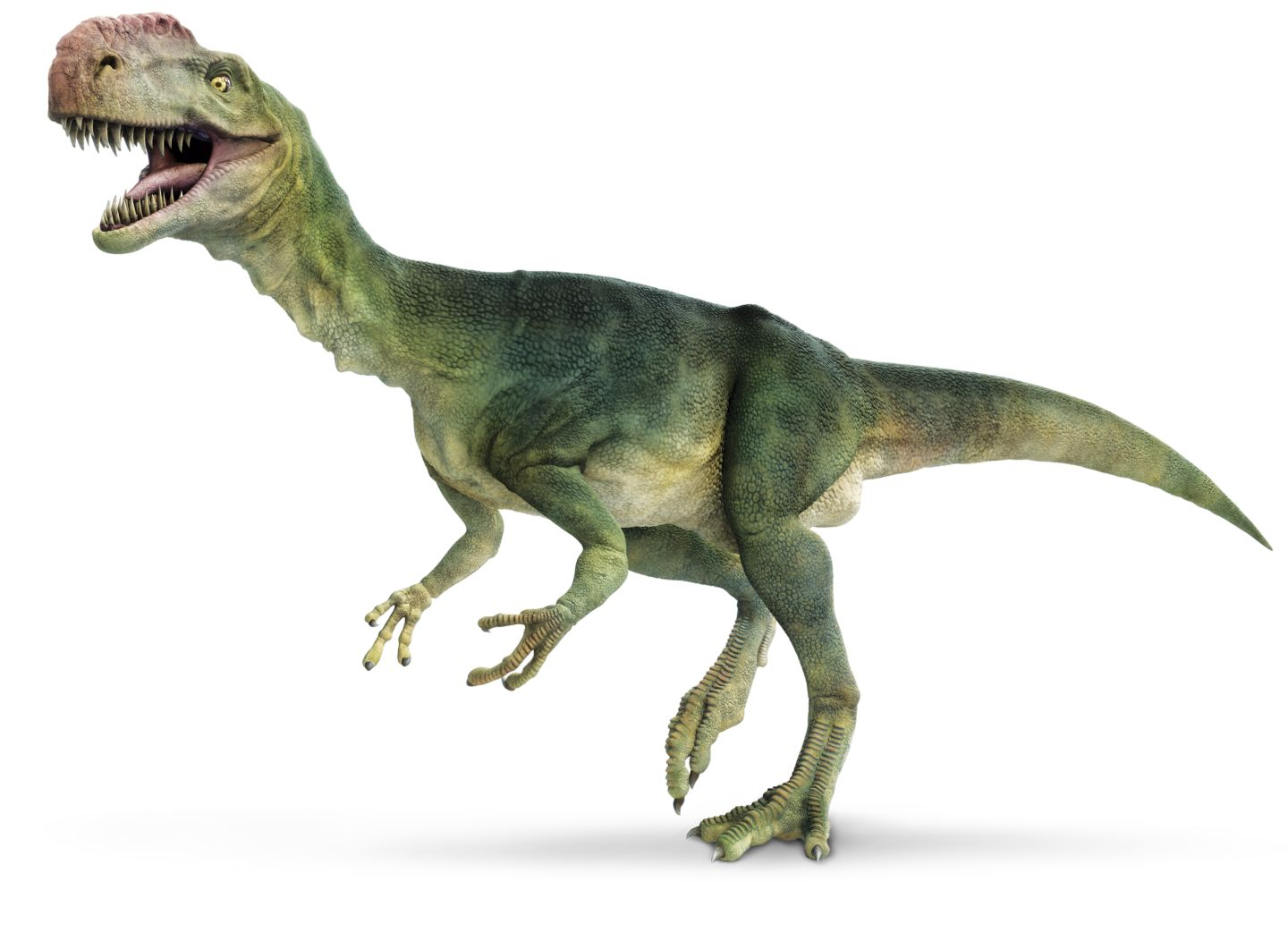 Our Dinosaurs – The Dino Expo